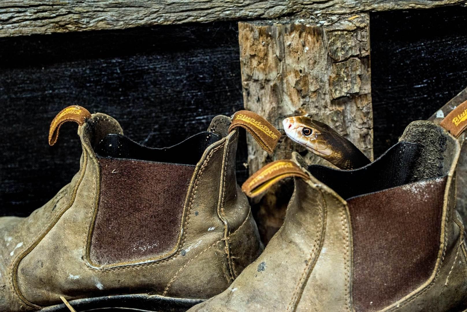 shoes-trends-women-0119